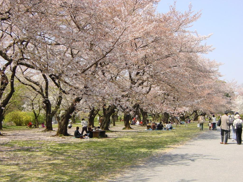 Koishikawa Shokubutsuen 2008/04/06
